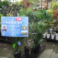 ki_foliageplant