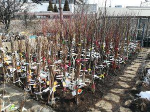 果樹苗木入荷2