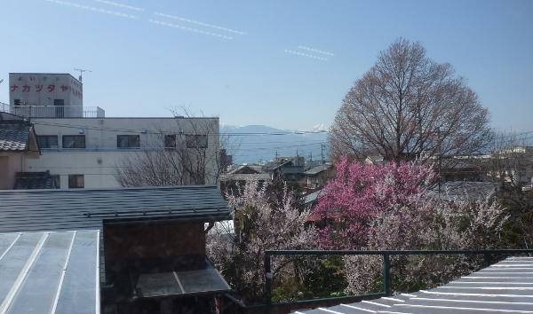 ガーデンストリートは春です