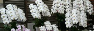 フラワーギフト・御祝花