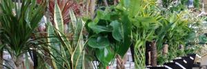 鉢花・観葉植物・多肉植物