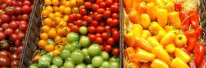 野菜種子・野菜苗・種芋