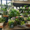 観葉植物の寄せ植え