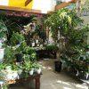 観葉植物 2020春