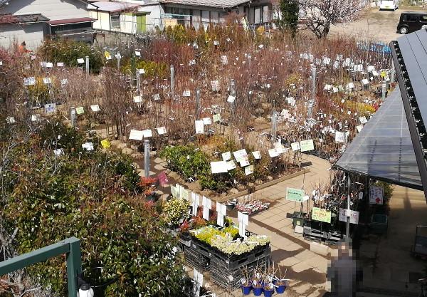 庭木売場全景202003