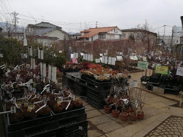 ガーデンストリート庭木売場