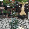 月桂樹(ローレル)