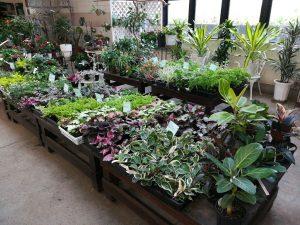 観葉植物苗売場