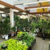 観葉植物売場 20210715