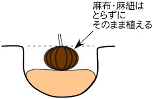 木の植え方2