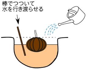 木の植え方3