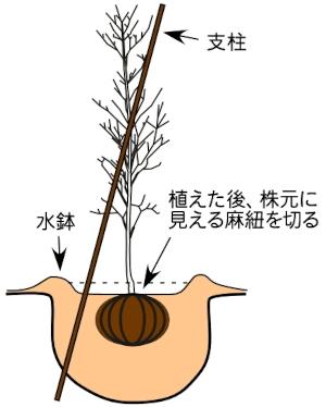 木の植え方4